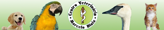 Centro Veterinário - Marcelo Diniz